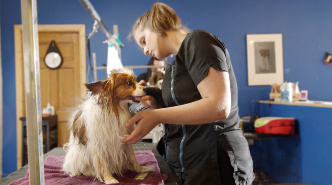 Dog Groomer cutting a dogs hair